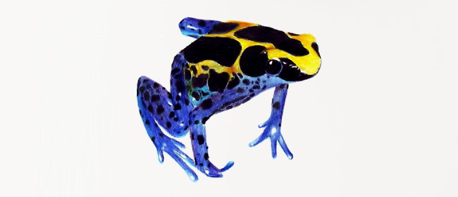 Dessin grenouille