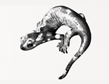 <strong>Project: </strong>Gecko