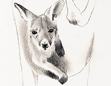 <strong>Project: </strong>Kangaroo